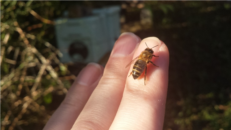 honey on my finger